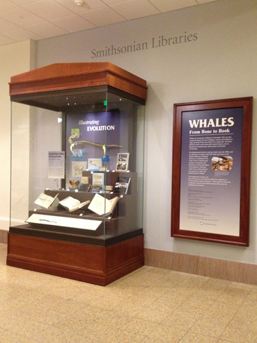 Whales Case 1
