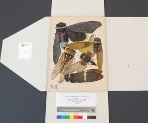 Eugène Séguy Prints in a Custom Enclosure