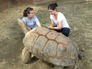Devon (right) with National Zoo staff and giant tortoise.