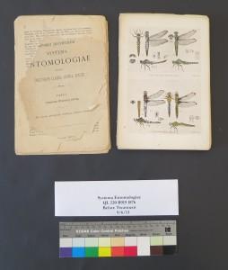 Systema Entomolgiae Before Treatment
