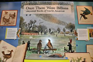 Once There Were Billions, the new Smithsonian Libraries/BHL exhibit at the National Museum of Natural History.  The Passenger Pigeon on the left, with her back to the viewer, is Martha, the last Passenger Pigeon that died 100 years ago in 1914.