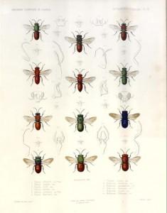 aabbutterflies