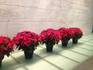 Poinsettias in the National Museum of American History (photo by Julia Blakely, 20140