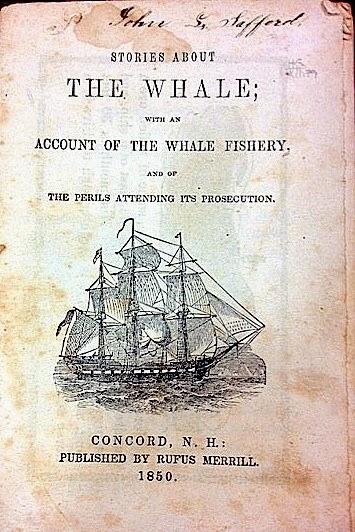 Whale-2-1