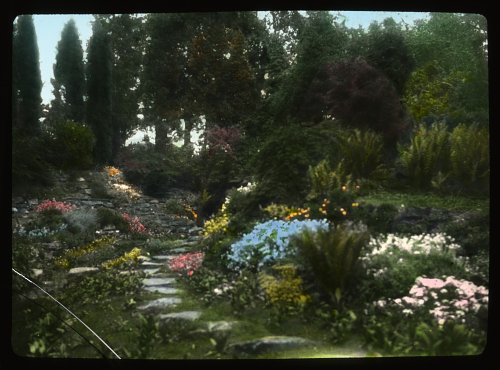 A view of the rock garden at Pyrford Court, designed by Gertrude Jekyll (lantern slide photograph by Mrs. P.H. Williams; Archives of American Gardens, Smithsonian Institution)