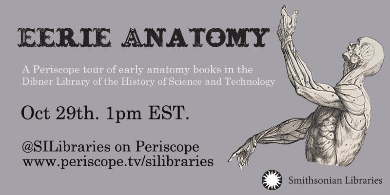 Eerie anatomy