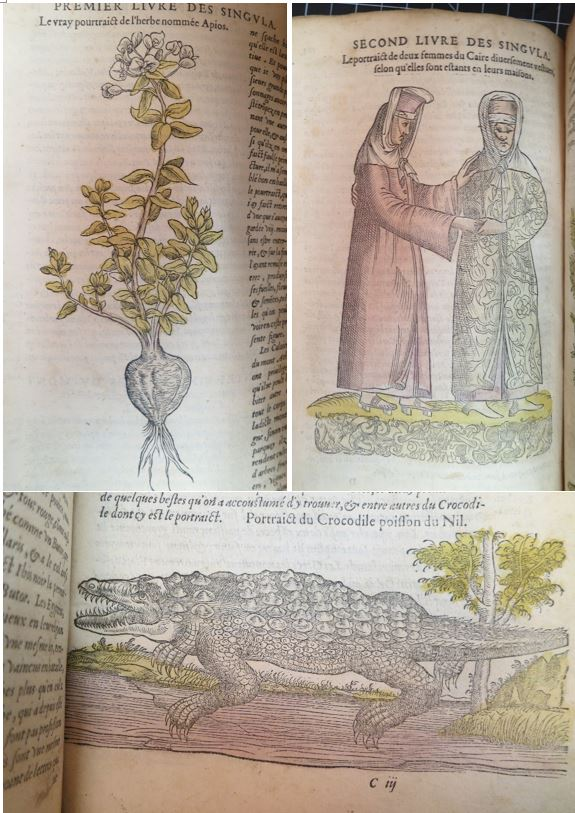 Hand-colored woodcut illustrations in Les observations