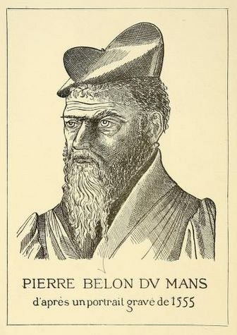 Pierre Belon portrait from A la memoire de Pierre Belon, du Mans, 1517-1564., via the Biodiversity Heritage Library.