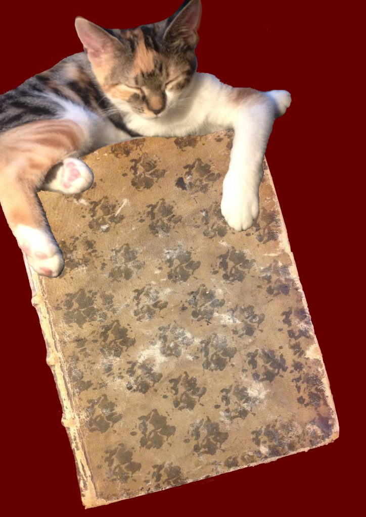 A mottled cat upon a mottled book