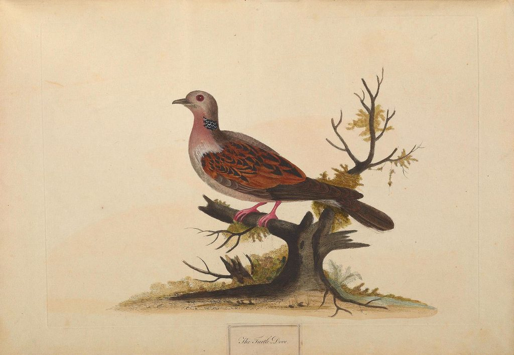A natural history of British birds London :Printed for S. Hooper,1775. http://biodiversitylibrary.org/item/108809