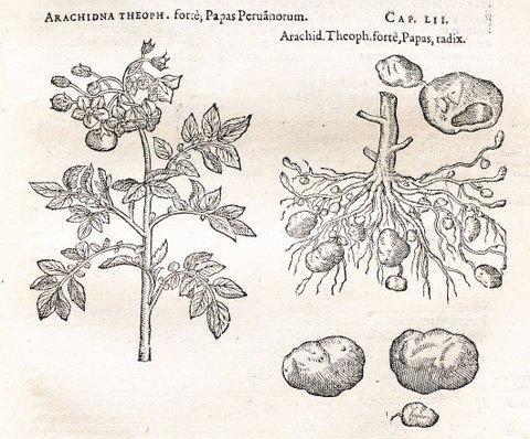 Clusius1601detail