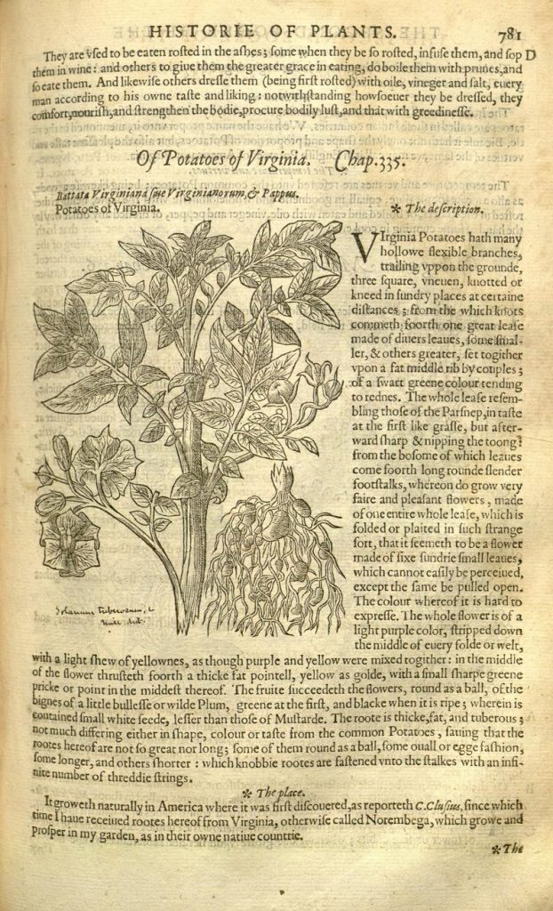 John Gerard, The Herball, or, Generall historie of plantes (Imprinted at London by John Norton, 1597). The Biodiversity Heritage Library has digitized the copy in the Peter H. Raven Library, Missouri Botanical Garden.