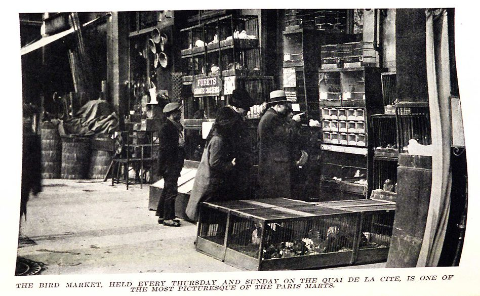Photograph by Thérèse Bonney of an out door street market selling birds in Paris.
