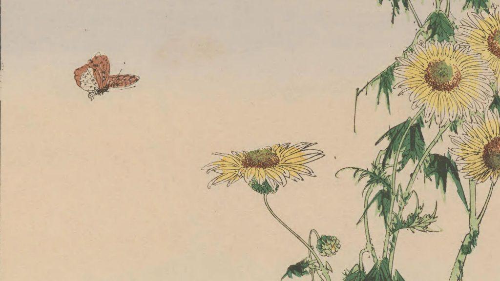 butterfly approaching a flower