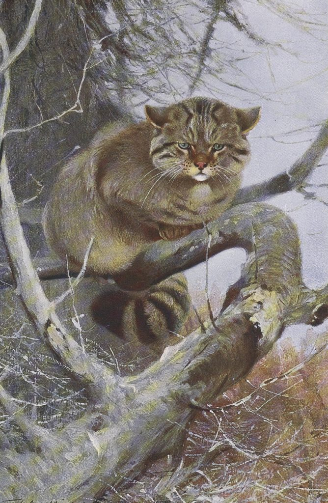 Book illustration of brown wild cat in tree