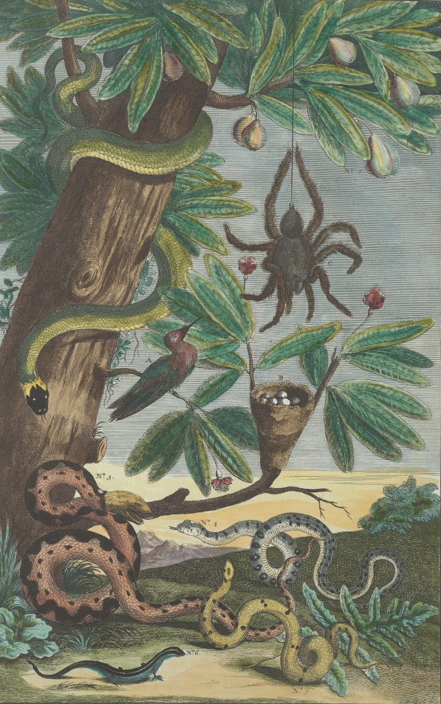 Book illustration of forest scene with various species of snakes, a large spider and a bird.