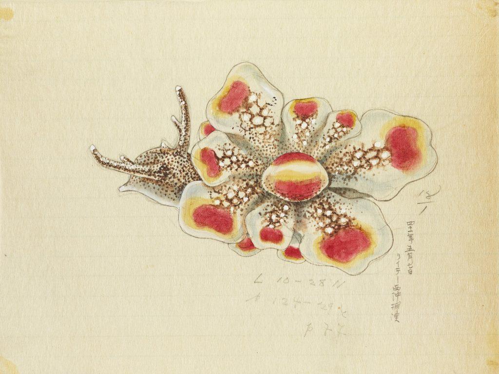 Watercolor illustration of slug with vibrant orange and brown markings.