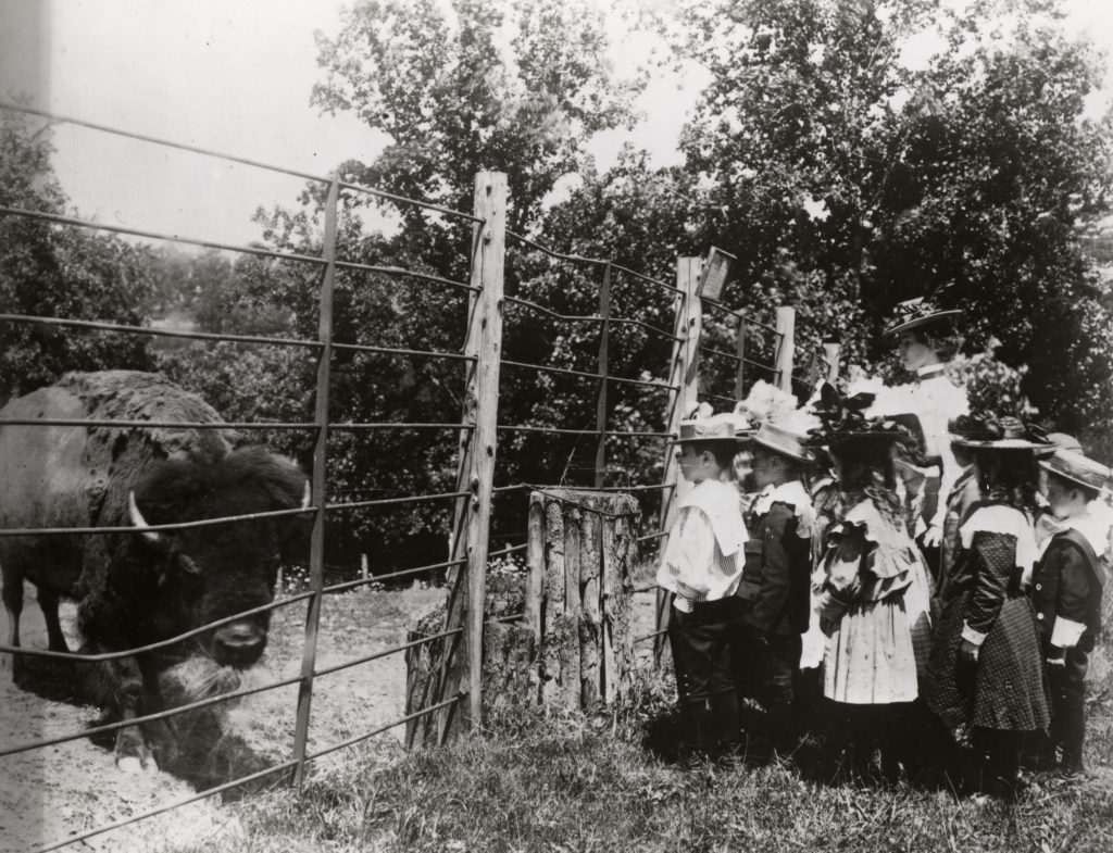 Black and white photograph of children in 19th century dress looking through fence at bison.